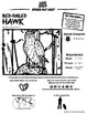 Red-Tailed Hawk -- 10 Resources -- Coloring Pages, Reading & Activities