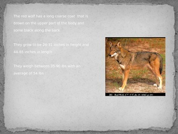 Red Wolf - Power Point - information facts pictures