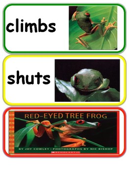 Red-eyed Tree Frog Vocabulary Cards with Pictures