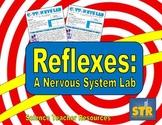 Reflexes: A Nervous System Lab