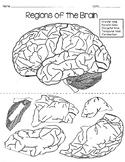 Regions of the Brain Puzzle