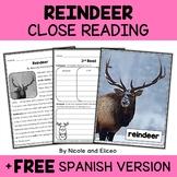 Reindeer Close Reading Passage Activities