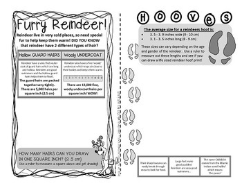 Reindeer! {A booklet of fun and facts about reindeer}