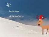 Reindeer Adaptations