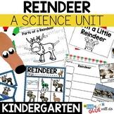 Reindeer: An Animal Study