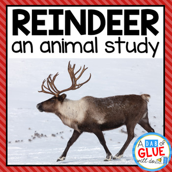 Reindeer: An Animal Study