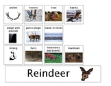 Reindeer Can Have Are Tree Map