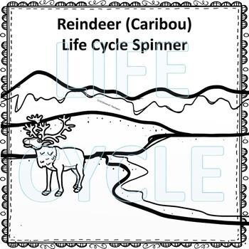 Caribou aka Reindeer (Life Cycle Spinner)