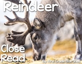 Reindeer Close Read
