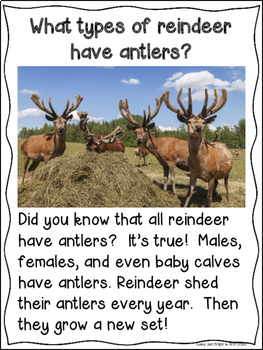 Reindeer Freebie   Differentiated Texts   Close Reading