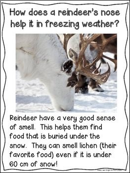 Reindeer Close Reading Unit for Kindergarten and First Grade- Nonfiction