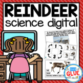 Reindeer Digital Science for Kindergarten Google Classroom (Distance Learning)