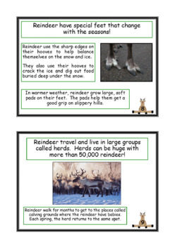 Reindeer Facts Mini Book