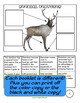 Reindeer Lapbook with Reading - Works as a Complete Unit Study!