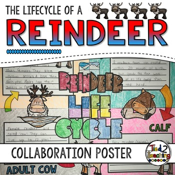 Reindeer Life Cycle Activity: Collaborative Research Poster