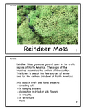 Reindeer Moss Mini Book - Imaged by the Scanning Electron Microscope