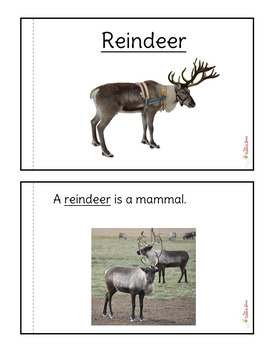 Reindeer Nonfiction Packet for Autism and Special Education