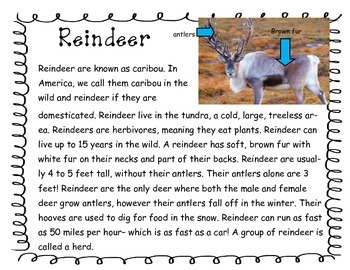 Reindeer Nonfiction text with comprehension and vocabulary