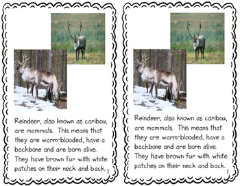 Reindeer: One Cool Animal - differentiated non-fiction student readers