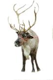 Reindeer Overlay