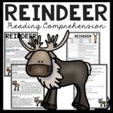 Reindeer Overview Informational Text Reading Comprehension Worksheet Winter