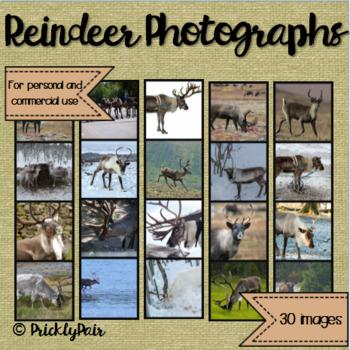 Reindeer Photo Backgrounds