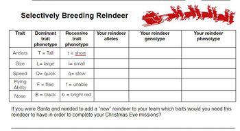 Reindeer Selective Breeding