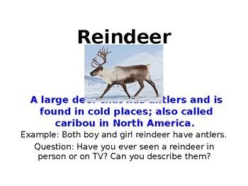 Reindeer Unit Vocabulary Powerpoint