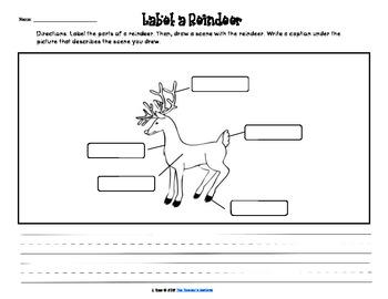 Reindeer and Caribou Activities (FREEBIE)