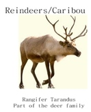 Reindeer/Caribou Unit to be used with a smartboard at Christmas