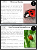 Reindeers, Christmas Beetles, Christmas Trees Nonfiction Reading Passages