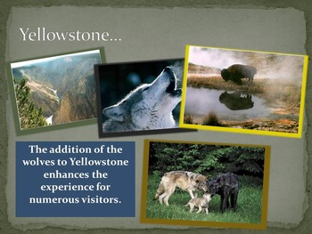Reintroduction of Gray Wolves Into Yellowstone National Park