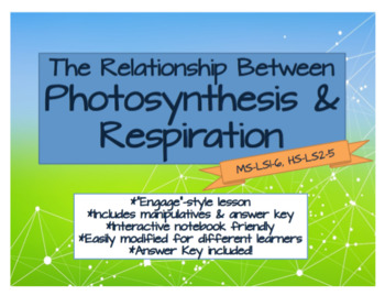Photosynthesis Flow Chart Worksheets Teaching Resources Tpt