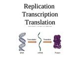 Replication  Transcription Translation
