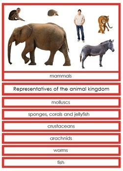 Animal Groups Cards (red borders)