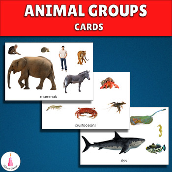 Animal Groups Cards