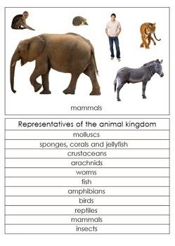 Animal Groups Cards