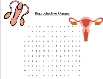 Reproduction Word Search Bundle