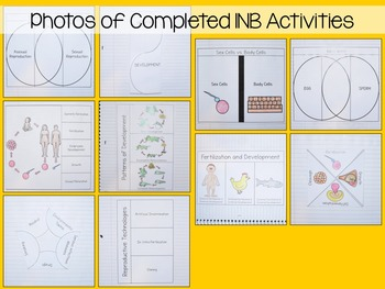 Reproduction and Development Interactive Notebook Unit