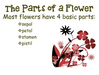 Spring Fling-Reproduction in Flowering Plants