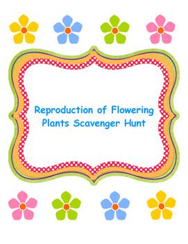 Reproduction of Flowering Plants Scavenger Hunt
