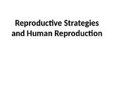 Reproductive Strategies and Human Reproduction