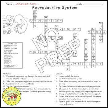 Reproductive System Biology Science Crossword Coloring Worksheet Middle School