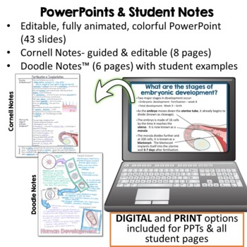 Reproductive System & Human Development- PowerPoint, Notes, & Diagrams
