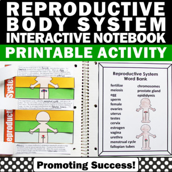 Reproductive System, Human Body Interactive Notebook, Human Body Systems Grade 5