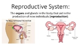Reproductive System Picture Word Wall