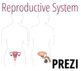 Reproductive System Prezi