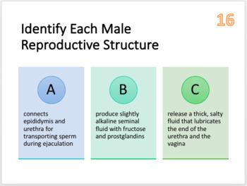 Reproductive System Task Cards