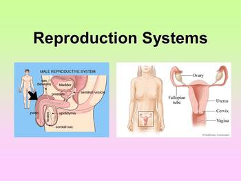 Reproductive System Teacher and Student Fill-in Notes