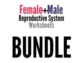 Reproductive System Worksheets Bundle